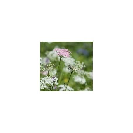 - Recharges Recharge, Fleurs des Alpes de Ambiance des Alpes