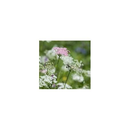 Bouquets parfumés Bouquet parfumé, Fleurs des Alpes de Ambiance des Alpes