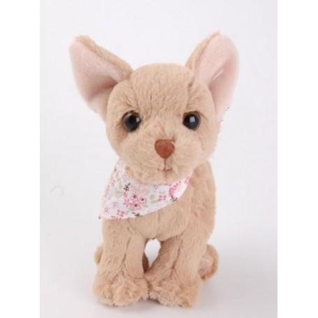 Peluche, Chihuahua from Bukowski in Paris